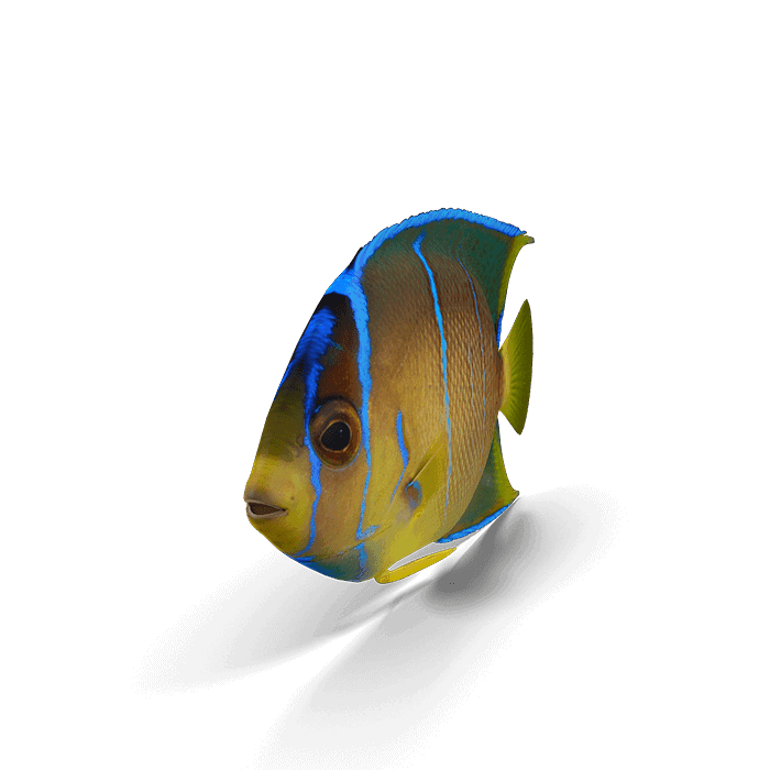 fish-115
