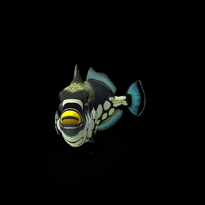 fish112