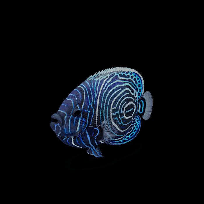 fish114