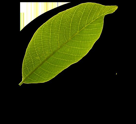 leaf2 The Plus Addons for Elementor