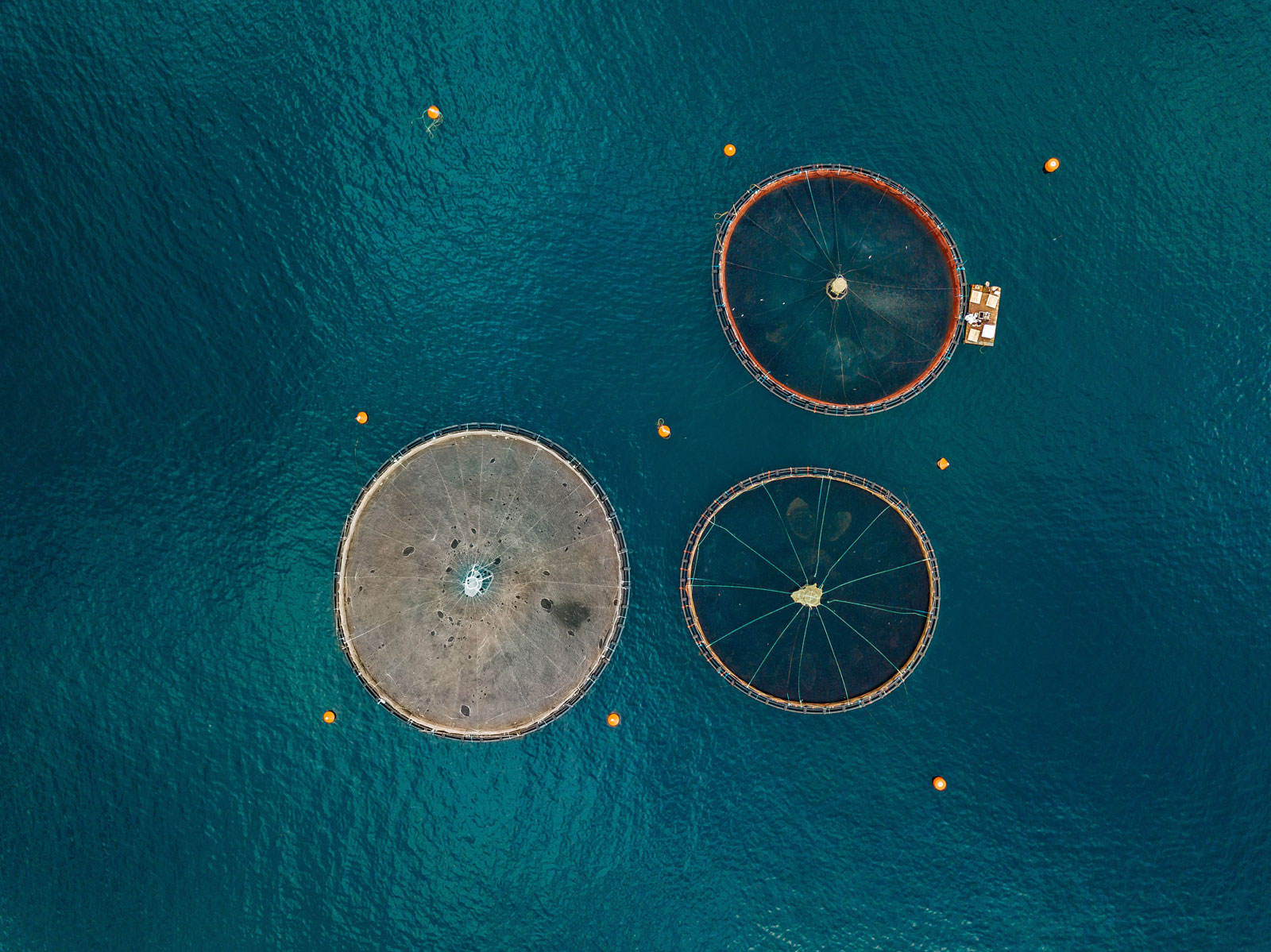 salmon fish farm with floating cages aerial view PGRUE79 The Plus Addons for Elementor
