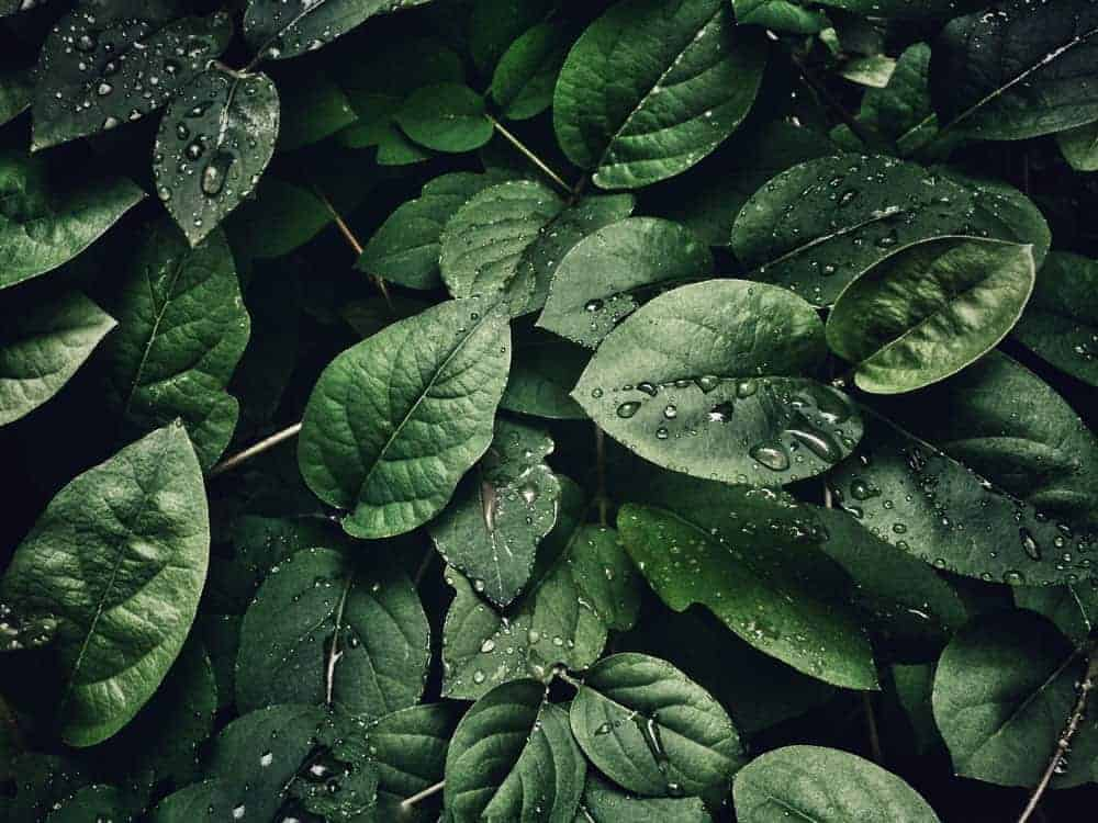 4k wallpaper close up dew 807598 The Plus Addons for Elementor